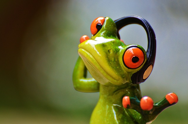 frogs-903221_640